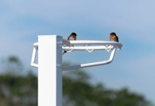 Birds perched upon a NBESH system
